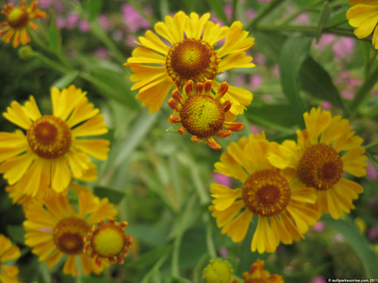 Yellow Green Flowers Images Pictures Becuo